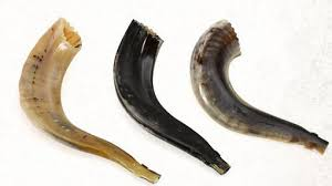 purchase shofar purchase a shofar in edmonton alberta keter malchut israel search