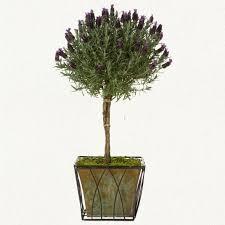 Topiaries Plants - 105 best topiaries images on pinterest topiaries gardens and plants
