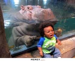 Baby Hippo Meme - hippo memes funny hippo pictures memey com