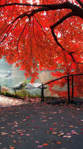 latest wallpaper for android in hd 1440x2560 red autumn tree hd wallpaper android phone