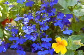 free stock photo 2838 cottage garden flowerbed freeimageslive