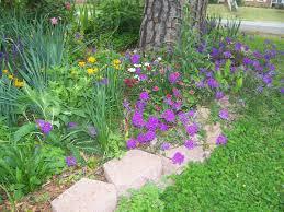 Rock Garden Perennials by Verbena