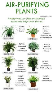 best 25 plant decor ideas on pinterest house plants interesting good house plants stupendous home ideas