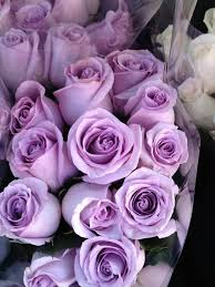 lavender roses 591 best flowers roses in purple or lavender images on