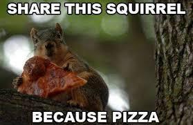 Squirrel Meme - squirrel memes squirrel memes funny like share facebook