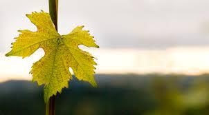 thanksgiving weekend at raptor ridge winery oregon wine