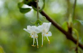 shrubs that flower in winter blooms u0027n u0027 food