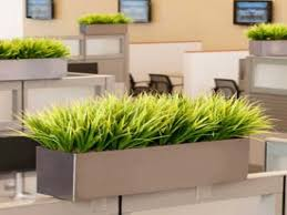 best 10 office cubicle plants inspiration of cubicle friendly