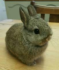 cute names for male female dwarf rabbit binkybunny com house