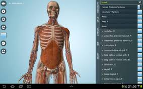 essential anatomy 3 apk anatomy 3d pro anatronica android apps on play