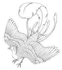 phoenix coloring pages coloringtop com birds coloring