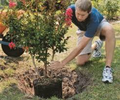 8 simple steps for planting trees quarto homes