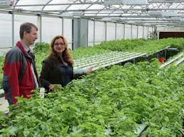 hydroponic gardening systems manificent design hydroponic