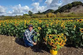 Avila Beach Barn Avila Valley Barn San Luis Obispo Ca Home Page