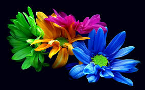 wallpaper 4k color wallpaper download 5120x3200 intense colour of the flowers hd free