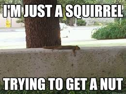 Squirrel Nuts Meme - i m just a squirrel trying to get a nut misunderstood squirrel