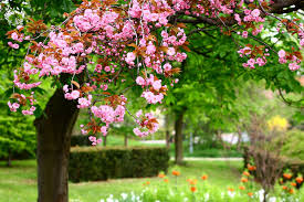 flower garden blossoms wallpaper 3840x2560 176822 wallpaperup