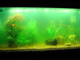 benefits of a fish tank and the science u0026 feng shui behind it