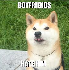 What Breed Is Doge Meme - doge memes daily wow such amaze