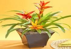 12 Best Plants That Can by Marvelous Best Indoor Plants For Direct Sunlight Balcony Garden