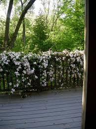 kletterpflanzen fã r balkon 33 best gardening balkon images on