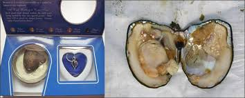 pearl wish necklace images How oysters form pearls jpg