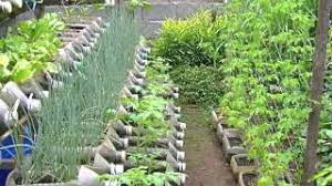 fresh inspiration container vegetable gardening ideas imposing