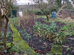 winter plants and vegetables to grow in your garden five spot