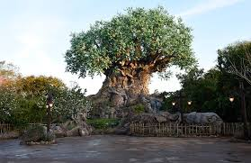 tree of grows new roots at disney s animal kingdom disney
