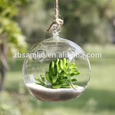 glass globe hanging terrarium glass globe hanging terrarium
