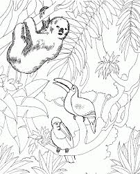 special zoo coloring page perfect coloring pag 5288 unknown