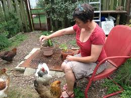 Chickens For Eggs In Backyard Champaign Writing Rules For Backyard Chickens News Local State