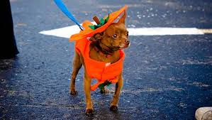 Vizsla Halloween Costume 10 Halloween Costumes Pets 2012 Mnn Mother Nature