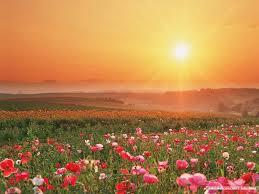 my beutiful roses the beautiful sun rise