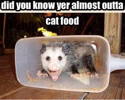 Food Meme - mouse eats up all of cat s food meme your friends