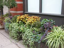 container garden ideas for shade in scenic apartment porch