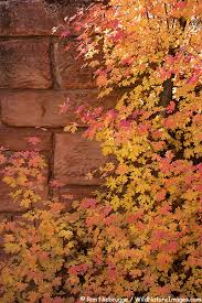 autumn colors in zion national park utah i wanna go there and