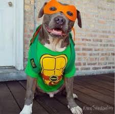 Halloween Costumes Boxer Dogs Boxer U0027s Halloween Costume Infamous