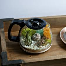 decor unique style of terrarium coffee table for creating indoor