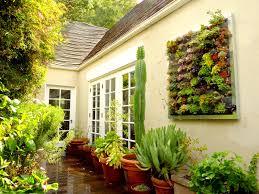 19 indoor gardening ireland ginkgo biloba tree clarenbridge
