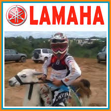 Motocross Meme - best moto memes moto related motocross forums message boards
