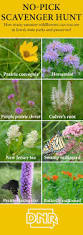 30 best native plant reference 38 best iowa native wildflowers images on pinterest iowa