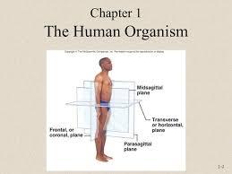 Human Anatomy And Physiology Chapter 1 1 1 Anatomy And Physiology Sixth Edition Rod R Seeley Idaho