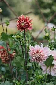 Cut Flower Garden by Journal U2014 Cmd