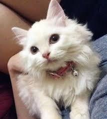 25 aristocats kitten names ideas alexa music