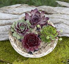 mexican gift basket succulent gift basket succulent plants gifts succulent plant