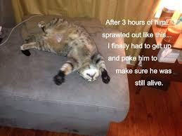 Fat Cat Heavy Breathing Meme - meet chewbacca meme by rebekah 84 memedroid