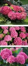 Flowering Shrubs For Partial Sun - 222 best deb o u0027s gardens images on pinterest flowering shrubs