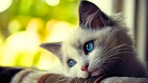 imagenes de gatitos sin frases la triste historia de un inocente gato a purr tale juegagerman