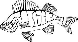 perch fish underwater submarine coloring wecoloringpage